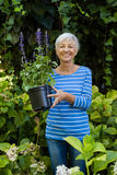 Portrait of smiling senior woman holding purple flower pot amidst plants Stock Photography
