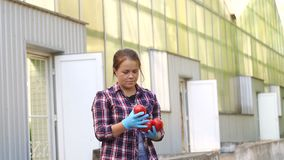 Young Woman hands with gloves holding red tomatoes, working in a greenhouse. Portrait of a smiling woman gardener in blue gloves with ripe tomatoes in his hands stock video