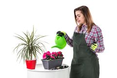 Portrait of smiling woman professional gardener or florist in apron isolated on white background royalty free stock photo