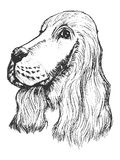 Portrait of spaniel. Vector, sketch, hand drawn illustration of spaniel Stock Images