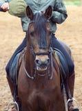 Portrait of spanish horse Stock Image