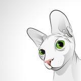 Portrait of sphynx cat Stock Image