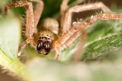 Portrait of a spider. close Stock Photos