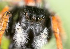 Portrait of a spider in nature. super macro Royalty Free Stock Images