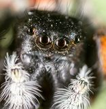 Portrait of a spider in nature. super macro Stock Photos
