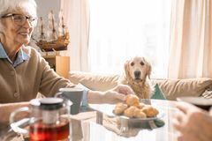 Spoiled Dog Asking for Treats stock images