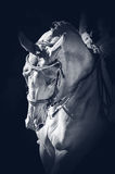 Portrait of a sport dressage horse Royalty Free Stock Images
