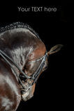 Portrait of the sport horse Royalty Free Stock Image