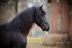Portrait of a sports black horse. Royalty Free Stock Photos