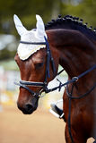 Portrait of a sports horse. Royalty Free Stock Photography