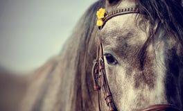 Portrait of a sports stallion Stock Photography