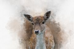 The portrait of spotted fallow deer doe standing in the grass.  royalty free stock image