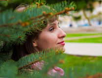 Portrait in spruce Stock Images