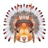 Portrait of Squirrel in war bonnet. Stock Images