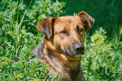 Portrait of Sstreet Dog. Among the Grass Royalty Free Stock Image