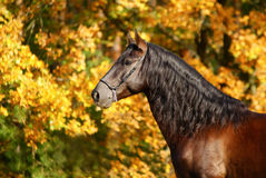 Portrait of the stallion Stock Photo