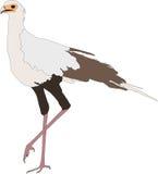 Portrait of a standing secretary bird Royalty Free Stock Photography