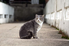 Portrait of a stray cat Royalty Free Stock Image