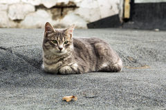 Portrait of a stray cat Stock Image