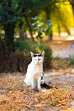 Portrait of stray cat sitting under solar beam Stock Images