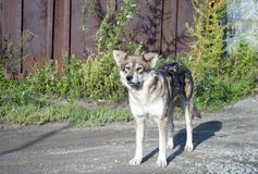 Portrait of a stray dog stock photos