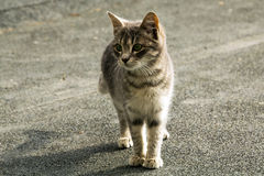 Portrait of a stray kitten Royalty Free Stock Photos