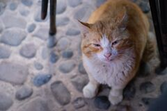 Portrait of a stray red cat with sore eyes