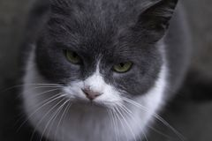 Portrait of a street cat on the old grey road of concrete stock photo