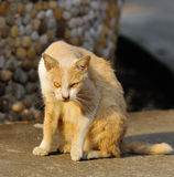 Portrait of a street cat outdoor Royalty Free Stock Images