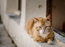 Portrait of Street Cats in Crete Greece Royalty Free Stock Image