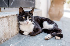 Portrait of Street Cats in Crete Greece Royalty Free Stock Photo