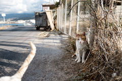 Portrait of Street Cats in Crete Greece Stock Photo