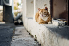 Portrait of Street Cats in Crete Greece Stock Images