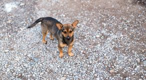 Portrait of a street dog. In the park in nature Royalty Free Stock Photos