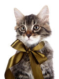 Portrait of a striped cat with a bow Royalty Free Stock Images