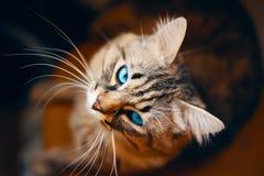 Portrait of striped cat. stock photo