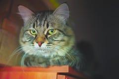 Portrait of striped cat. stock image