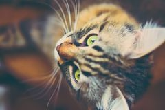 Portrait of striped cat. stock photos