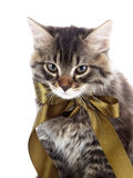 Portrait of a striped cat with a tape Royalty Free Stock Image