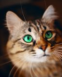 Portrait of striped cat. stock photography