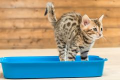 Portrait of a striped smart kitten. On the toilet tray royalty free stock photos