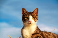 Portrait of a stripey cat. With yellow eyes Stock Photo