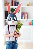 Portrait of stylish polygonal easter rabbit with a fresh spring potted flowers, polygonal mask royalty free stock image