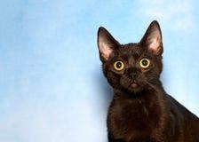 Portrait of a surprised black cat stock images