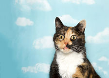 Portrait of a surprised calico cat on sky background Royalty Free Stock Images