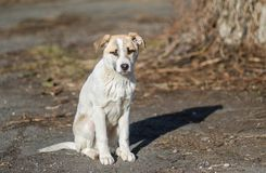 Portrait of sweet stray puppy Royalty Free Stock Photos