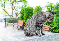 Portrait of tabby cat  sitting on stone platform in the park Stock Images