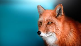 Portrait of a tame Fox. A place for a label. stock photo