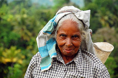Portrait Of Tamil Tea Worker. Ceylon tea is known all over the world for its taste and flavor. Only Tamil women work at the plantations in Sri Lanka. The civil Stock Photo