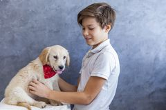 Teen boy with golden retriever. Portrait of teen boy with golden retriever by the wall royalty free stock photos